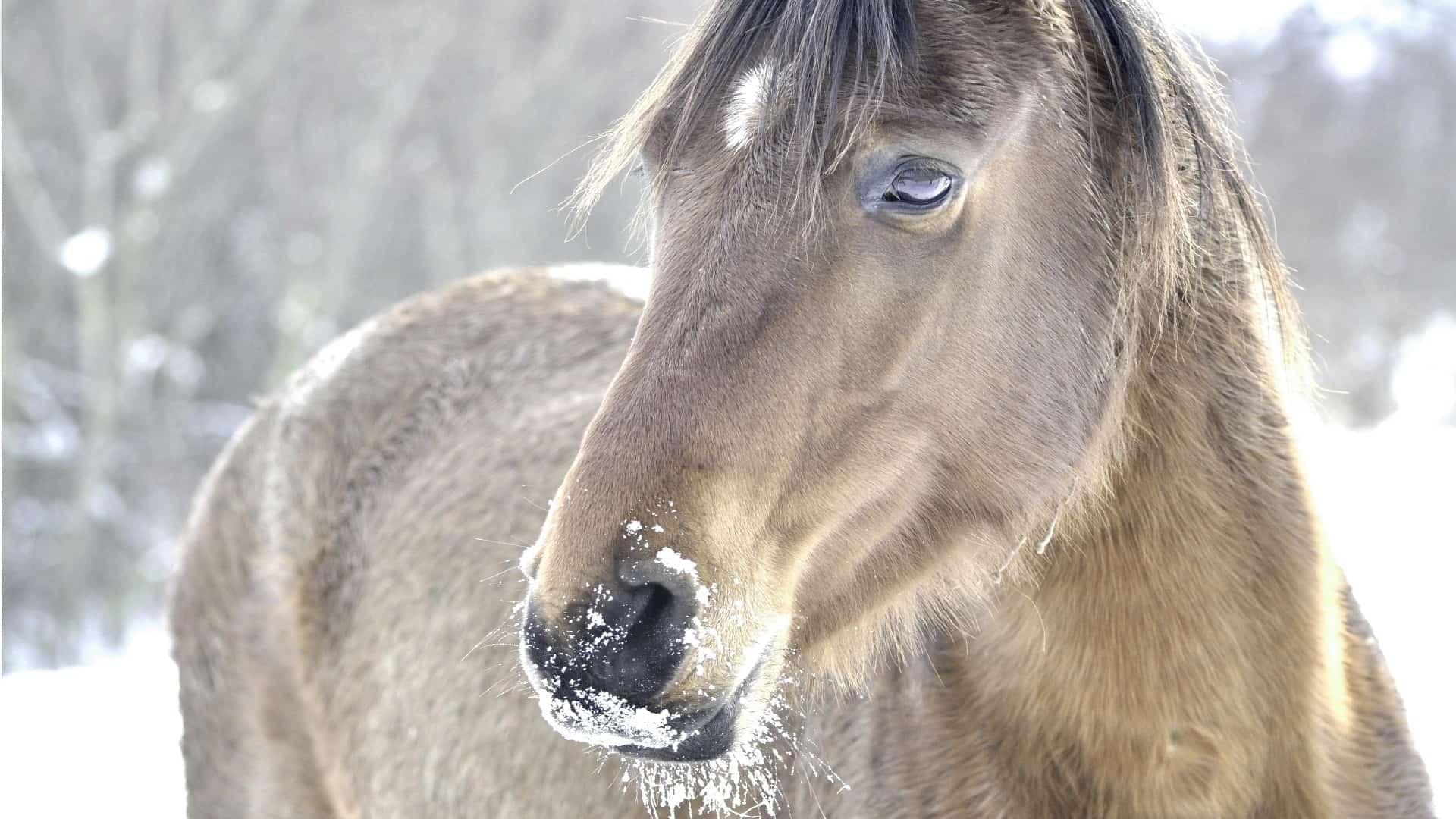 zand weg voor paarden